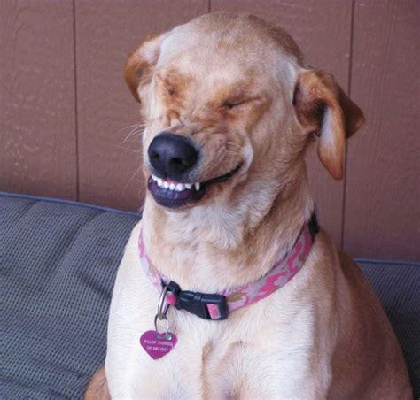 A Bunch of Smiling Dogs to Cheer You Up – FuzzFeed