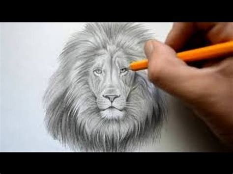 How to Draw a Lion Face: Easy way Step by Step drawing for