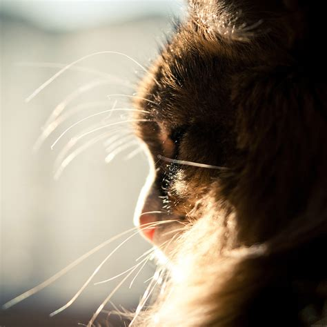 mi07-cat-looking-out-window-animal-cute - Papers